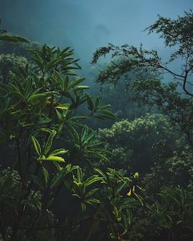 Plantas y ramas en la niebla
