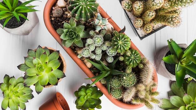 Plantas sobre superficie de madera vista desde arriba