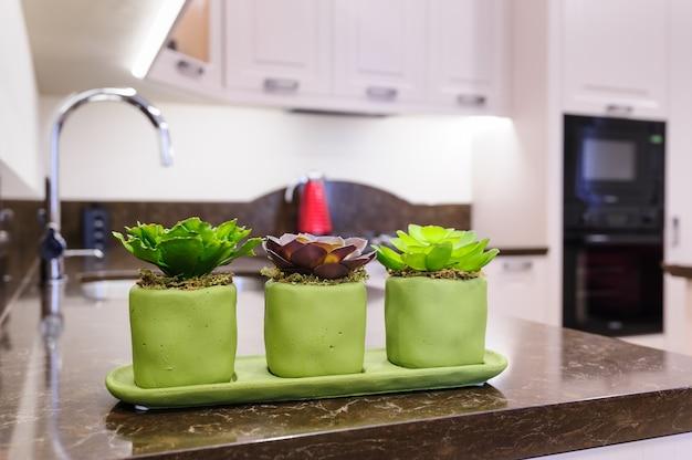 Plantas suculentas en la cocina