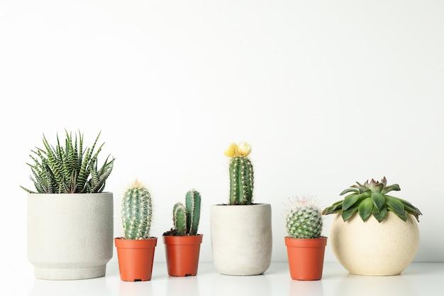 Plantas suculentas en macetas sobre fondo blanco, espacio para texto