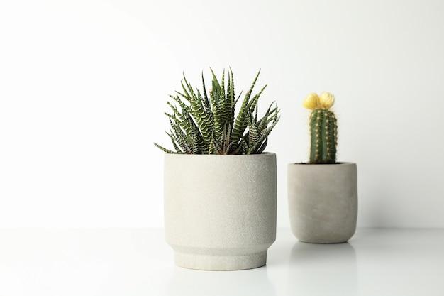 Plantas suculentas en macetas sobre superficie blanca
