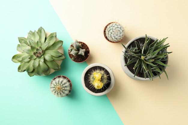 Plantas suculentas en superficie de dos tonos.
