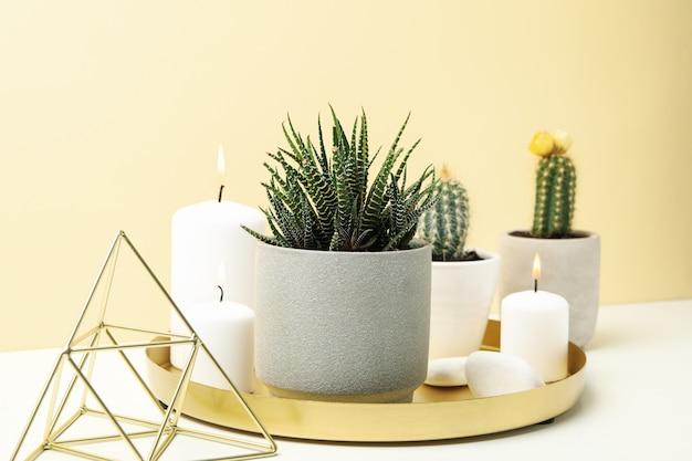 Plantas suculentas y velas en la mesa blanca. plantas de interior
