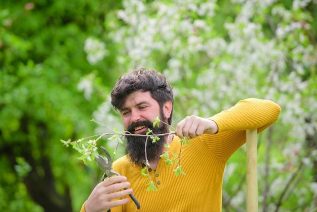 Las plantas de tijeras de jardinería trabajan en el jardín jardinero barbudo con tijeras de jardinería trabajan en el jardín