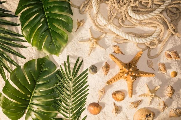 Plantas tropicales y conchas marinas.