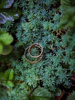 Plantas verdes y anillos de boda