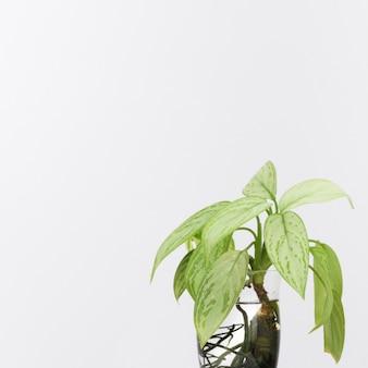 Plantas verdes en florero de agua.