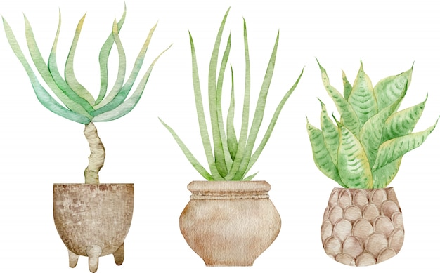 Plantas verdes en macetas caseras aisladas en el fondo blanco. dibujado a mano acuarela conjunto ilustración. decoración de interiores.