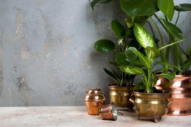 Plantas verdes en macetas de latón y cobre.