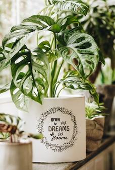 Plantas verdes en macetas en la ventana. decoración del hogar y concepto de jardinería.