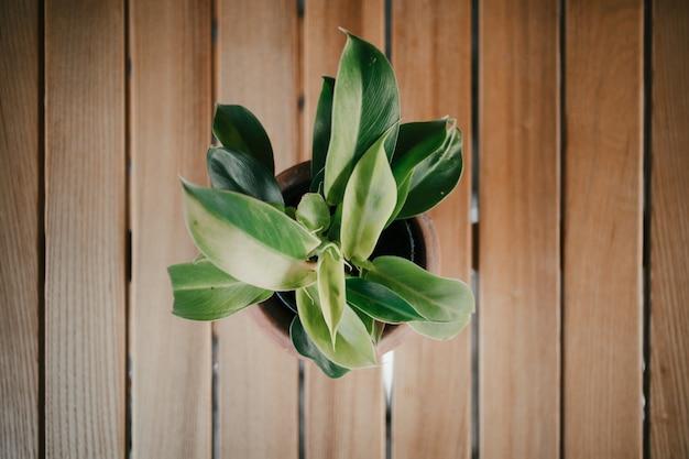 Plantas verdes en potes de arcilla artísticos en la tabla de madera.
