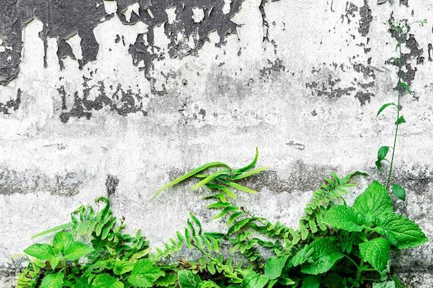 Plantas verdes en el viejo muro de hormigón con grunge y sucio. fondo retro o vintage.
