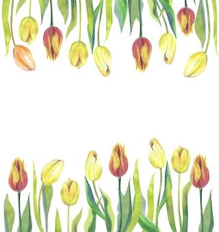 Plantilla hermosa de la bandera de los tulipanes de la acuarela aislada en blanco.