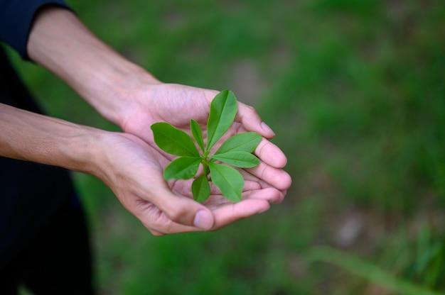 Plantones de hojas verdes puestos en manos de hombres.