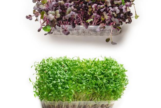 Plántulas de cilantro fresco en recipiente de plástico aislado sobre superficie blanca