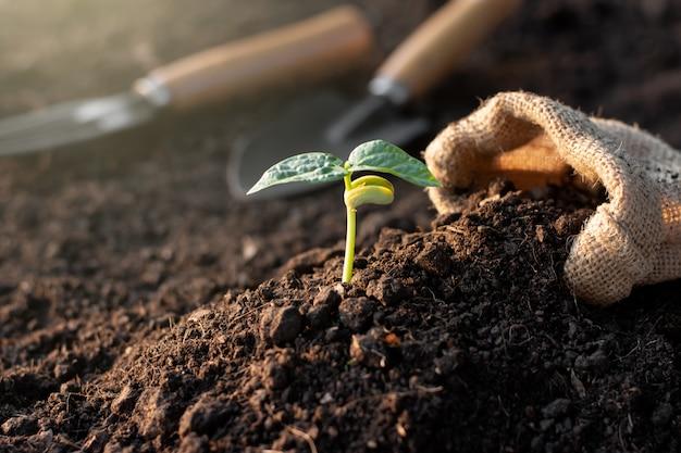 Las plántulas crecen del suelo fértil.