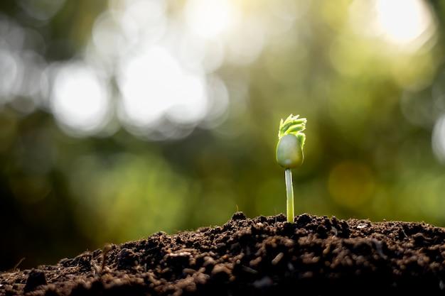 Las plántulas crecen de suelo fértil.
