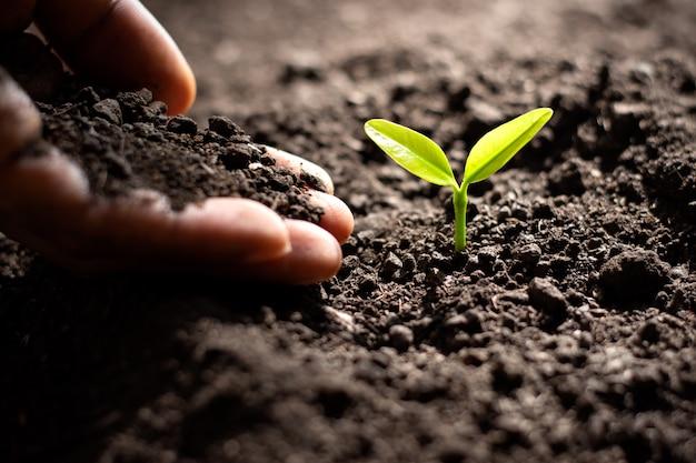 Las plántulas crecen de la tierra rica.