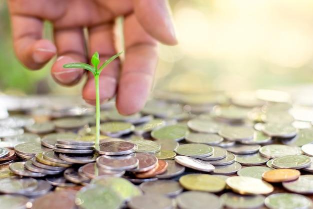 Las plántulas se cultivan a partir de las monedas dispersas.