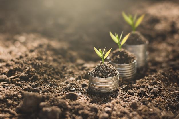 Las plántulas están creciendo en las monedas.