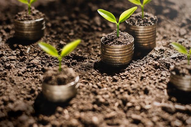 Las plántulas están creciendo en monedas.