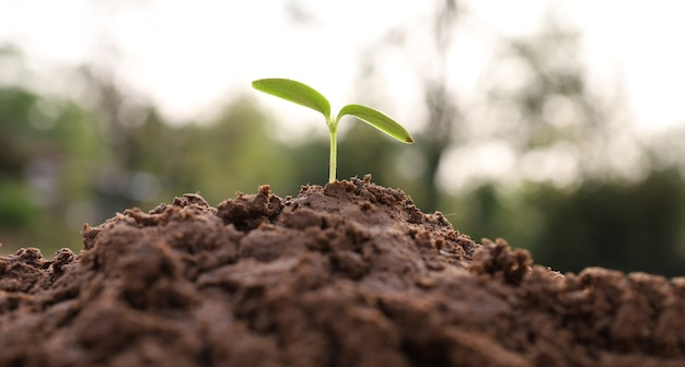 Las plántulas están creciendo en la naturaleza, el concepto de crecimiento empresarial y la conservación de la naturaleza.