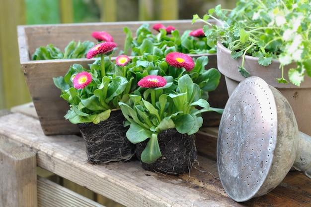 Plántulas de flores, macetas y herramientas de jardín.