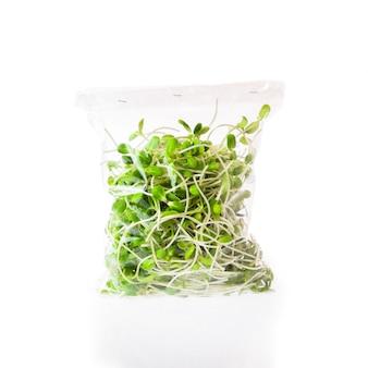 Plántulas de girasol jóvenes verdes en bolsa de plástico