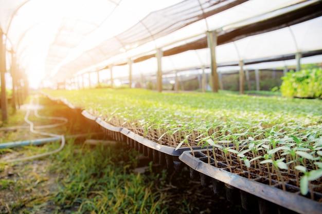 Plántulas de hortalizas orgánicas con luz solar.