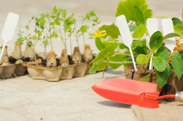 Plántulas en maceta creciendo