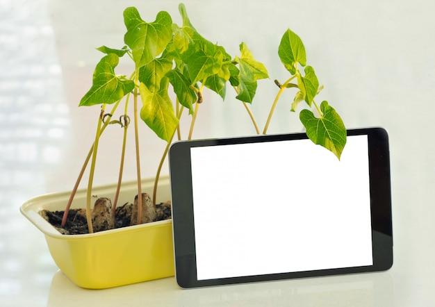 Plántulas en maceta que crecen en macetas biodegradables de turba sobre fondo de madera con teléfono y espacio de la copia.