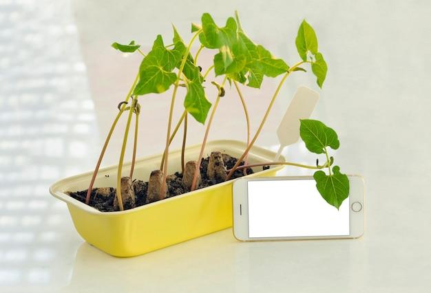 Plántulas en macetas que crecen en macetas biodegradables de turba sobre fondo de madera con phona y copia espacio.