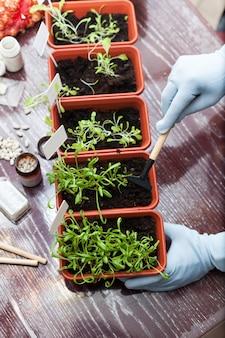 Plántulas de primavera. macetas con plántulas de hierbas en la cocina de la casa.