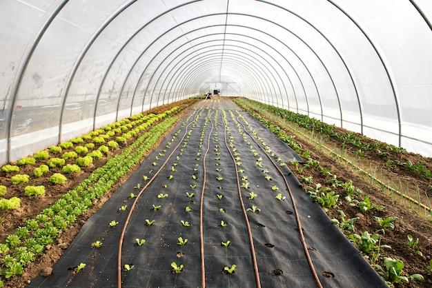 Plántulas recién plantadas en un invernadero en primavera