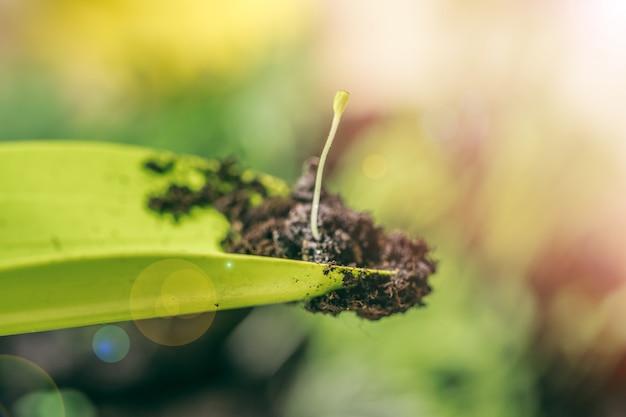 Plántulas verdes que crecen fuera del suelo