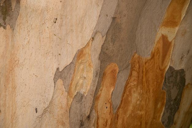 Platanus o textura de corteza de árbol plano, patrón de camuflaje