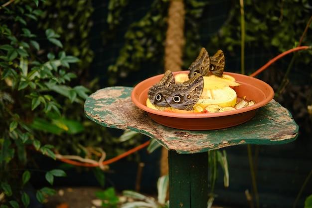 Plato lleno de frutas con mariposas búho rodeado de vegetación bajo la luz del sol
