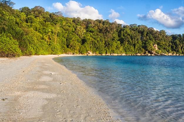 Playa de arena blanca con selva.