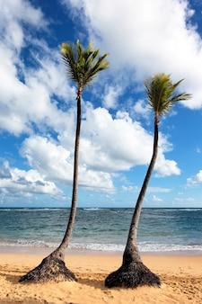 Playa caribeña con palmeras y cielo azul