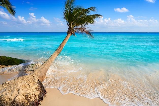 Playa del carmen playa palmeras méxico
