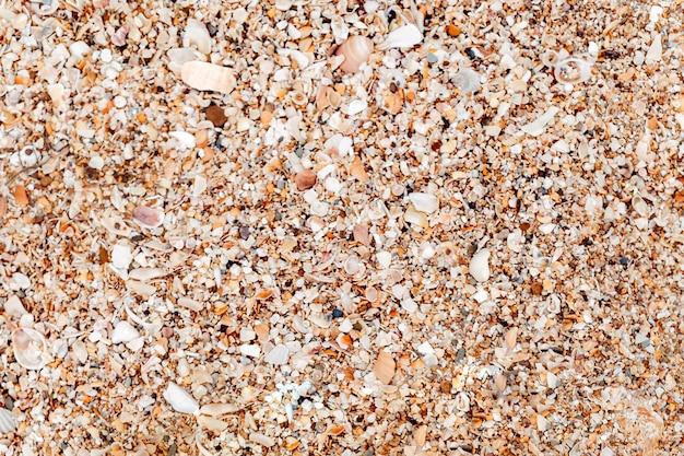 Playa con conchas marinas