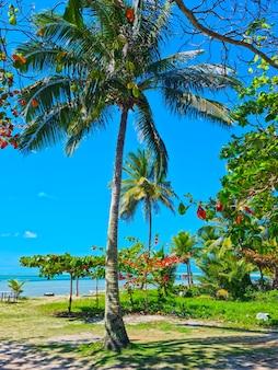 Playa coroa vermelha en porto seguro, bahía - turismo y destinos en el noreste de brasil - atracción turística, guía de viaje para brasil