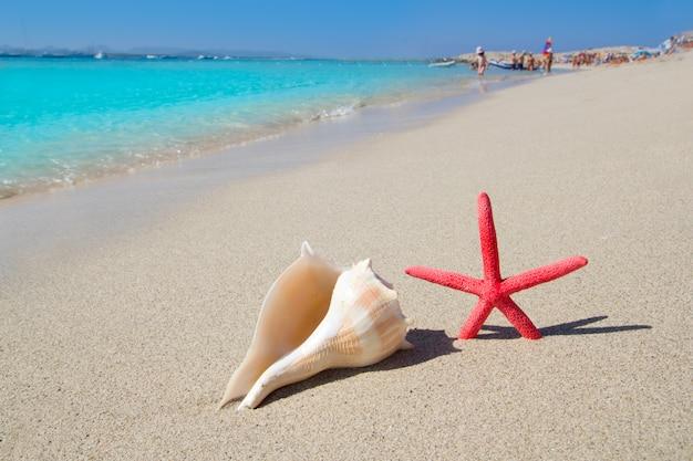 Playa estrella de mar y concha en arena blanca