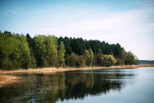 Playa fluvial con bosque día soleado