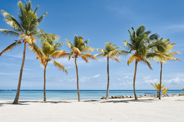 Playa con palmeras y arena blanca.