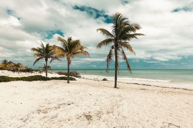 Playa con palmeras tropicales durante el día.