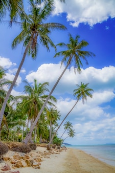 Playa tropical con árboles de coco que sobresalen en el mar, koh samui, tailandia
