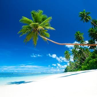Playa tropical en samoa