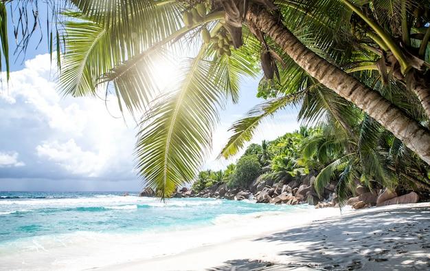 Playa tropical con palmeras, aguas cristalinas y arena blanca.
