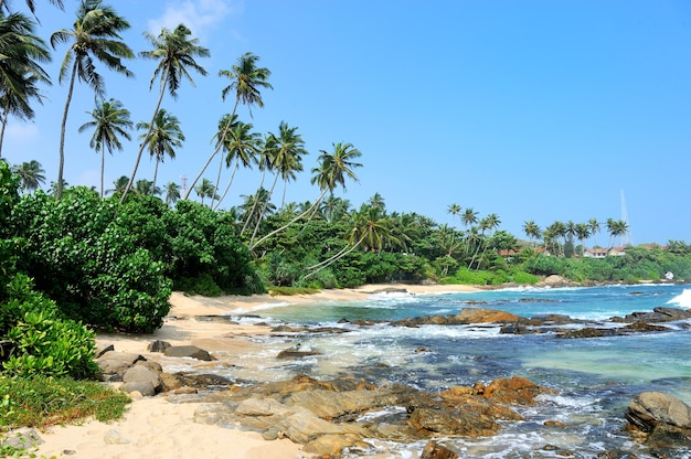 Playa tropical con palmeras en sri lanka